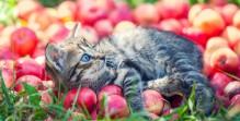 Cute little kitten relaxing on red apples in the garden