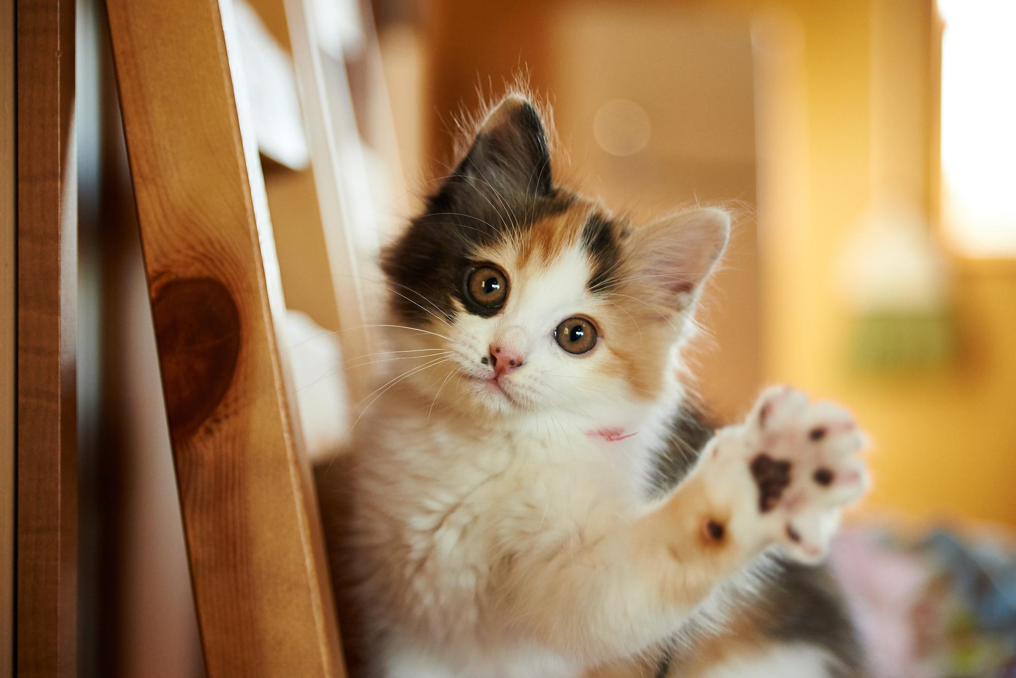 犬より猫がペットとして「人気」になってきた3つの理由 - まい ...