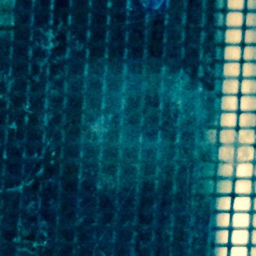 アメリカ・フロリダ州の女性が撮影したとされるエイリアンの写真