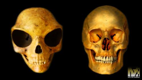 alien's_skull