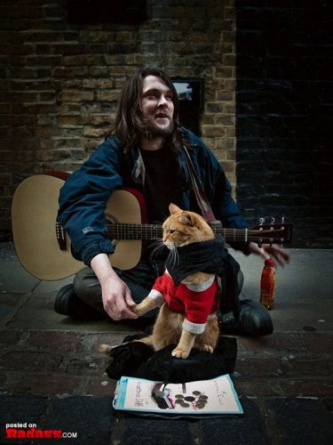 homeless-red-cat-bob-05