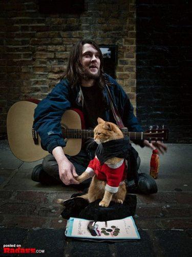 homeless-red-cat-bob-05