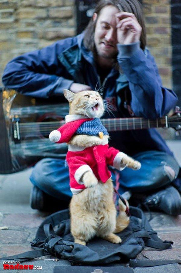 homeless-red-cat-bob-07