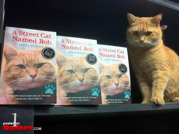 homeless-red-cat-bob-09