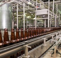 Beer bottles on the conveyor