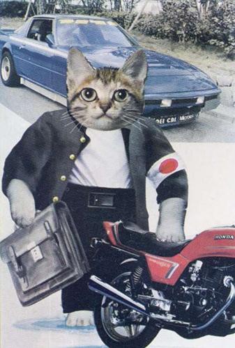 なめ 猫 画像