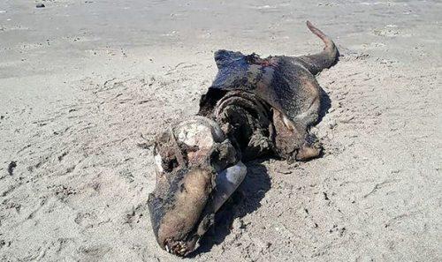 海岸に漂着したグロブスター(巨大な生物の死骸)
