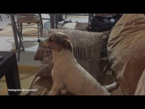 犬,動画,恐怖